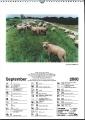 Heeder Heimatkalender 2000_5
